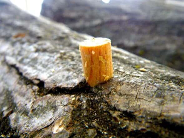 椎茸 原木栽培